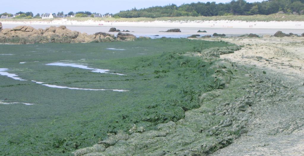 marée-verte-seche-grd